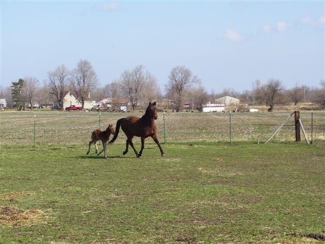 pics of baby horses