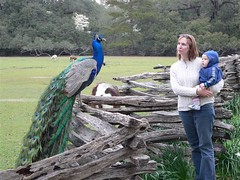 Jude and Charline meet a peacock at Magnolia Plantation in Charleston