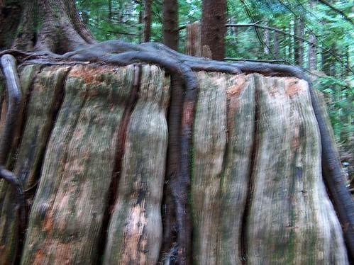 01-Stump