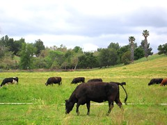 farmwalk.1 (mooo)