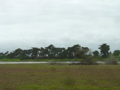 Moss Landing Swamp