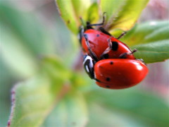 Makin' Baby Ladybirds