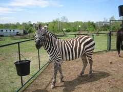 And even a zebra