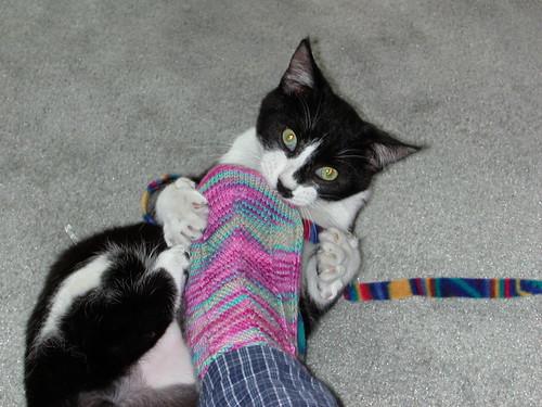 New kitty attacks