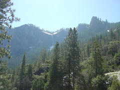 Yosemite - Mountain and Forest