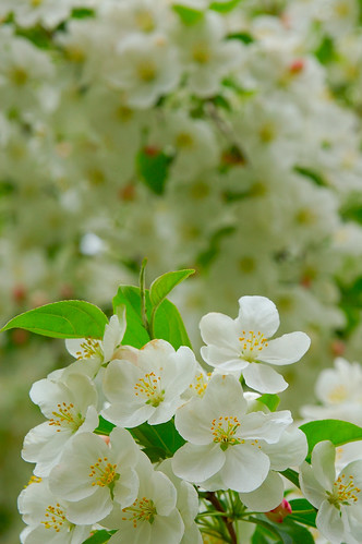 Spring Petals 3