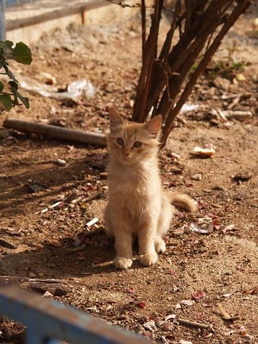 cat 18/248