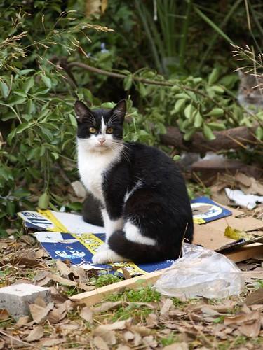 cat 27/248