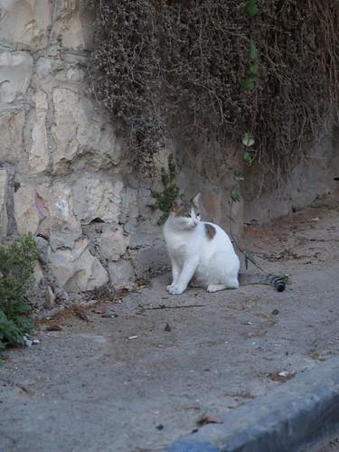 cat 44/248