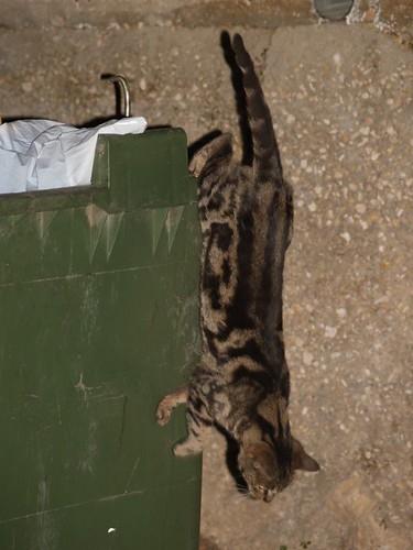 cat 59/248