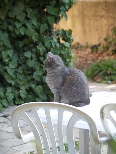 cat 127/248
