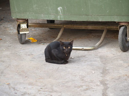 cat 145/248