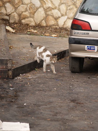cat 191/248