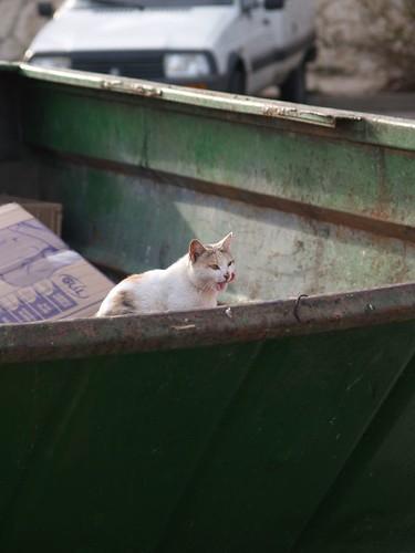 cat 198/248