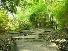 Chemin dans les bambous