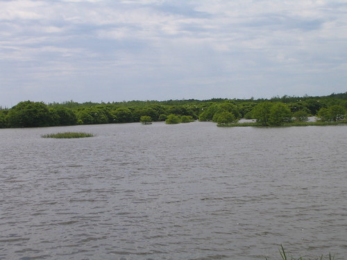 Bluff Lake with birds alight.JPG