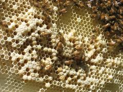 Beekeeping 2006 116