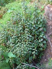 Mystery Plant En Masse