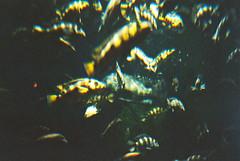 水族館でお魚♪