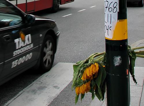 IMG_0252sunflowers