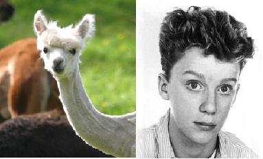 Alpaca Micheal Hall?