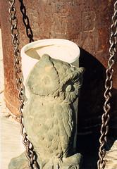 Hulaville Owl