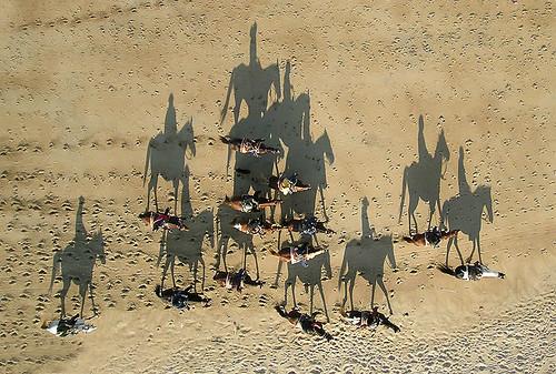 Pyramid of horses