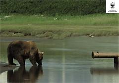 WWF - Agaist Toxic Waste - Drain
