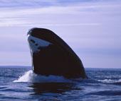 060713-whale-eyes_170