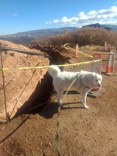 Mavis is never impressed with construction.