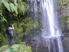Madeira Images - madeiraarchipelago.com
