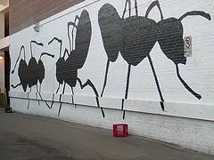 Ants! Ants!