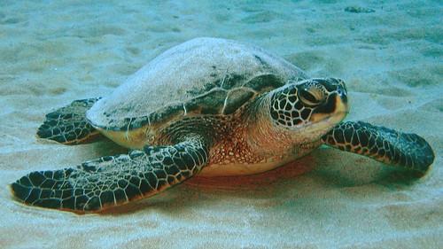pictures of ocean animals