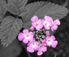 Flower2 cut