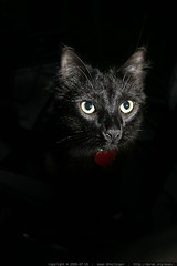rest in peace - catula, our black cat - img_0106.jpg