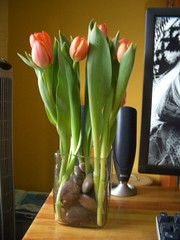 tulip 3/5
