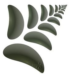 Stone Fern