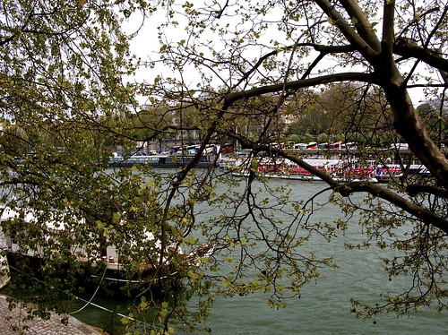 seine between the trees