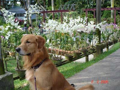 Sentosa flower 2