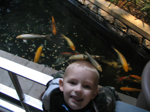colton and the goldfish