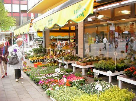 Blumen in der Stadt