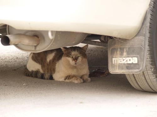 cat 94/248