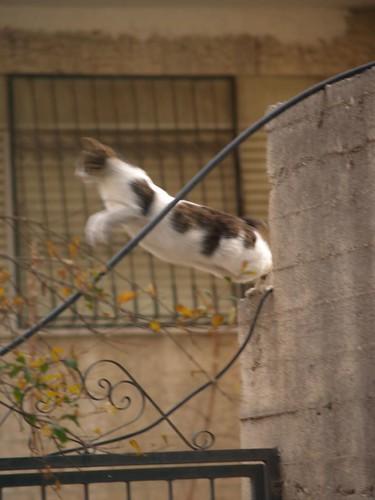 cat 100/248