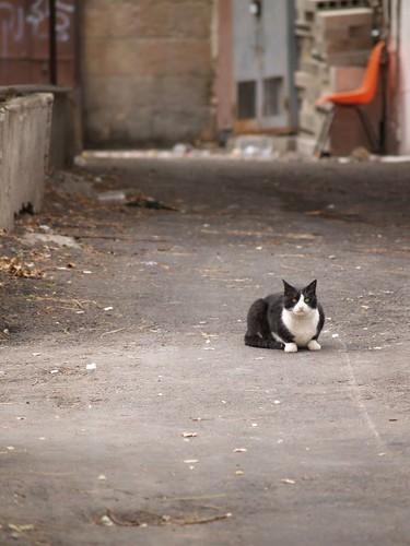 cat 177/248