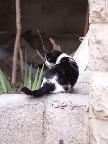 cat 184/248