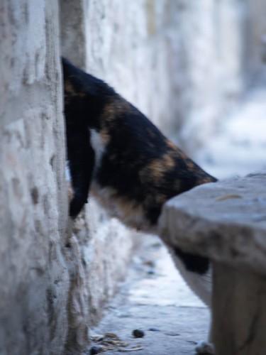 cat 193/248