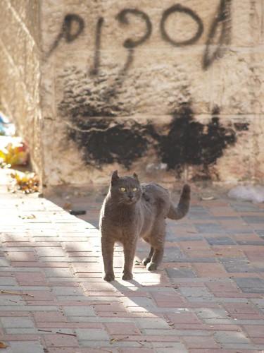 cat 213/248