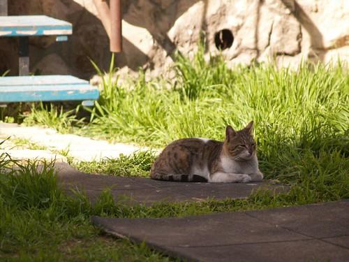 cat 221/248