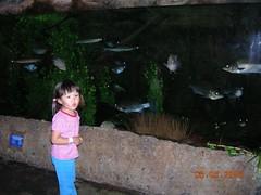 你看我看鱼多认真