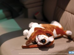 Peta-Dog-Seat